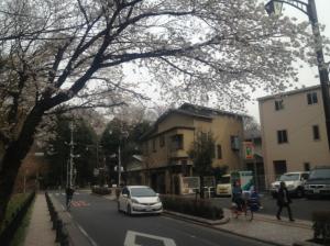 ゴール地点桜は満開