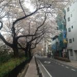 上水桜トンネル