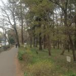 吉祥寺通り沿い春草木