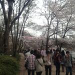 桜回廊いらっしゃい