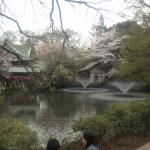 東洋的な桜と弁天堂セット
