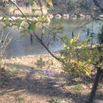 山桜アップ