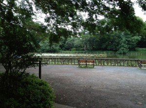 善福寺上の池スイレン
