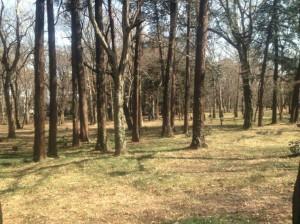 井の頭公園雑木林