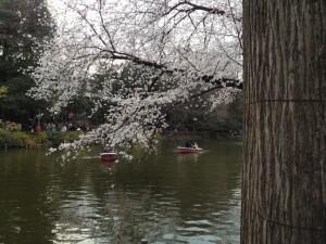 縁切りボートと桜
