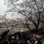 酒と宴(桜は?)