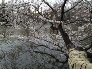 名木です(昨年参照)