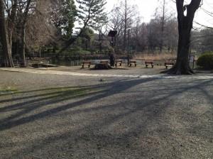 蓮と桜の無い善福寺池