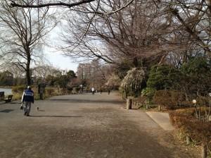 梅スポット(桜スポット予定)