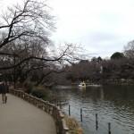 桜はスタンバイ中