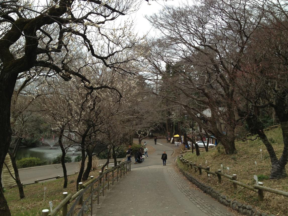 2013年梅の開花@井の頭公園