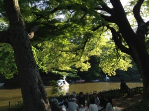 井の頭池2014初夏