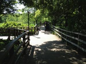 池の上での岐路