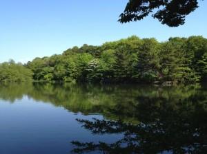初夏の石神井厳島神社