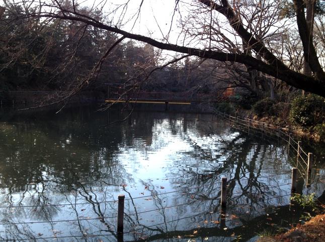 井の頭池 かいぼりの堰