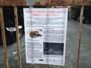 保護猫カフェ協賛者の募集
