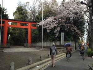 井草八幡宮と桜