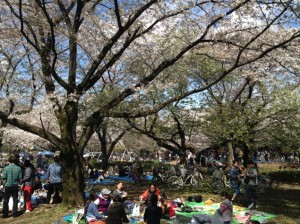 和田堀公園 花見の様子