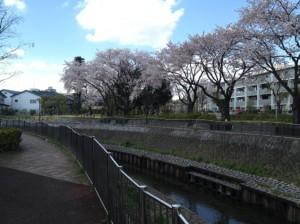 桜のポイントその1