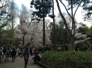 歯抜けでも桜は綺麗?