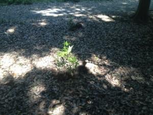 木漏れ日に育つ若い樹