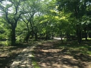 初夏の善福寺ローマ街道