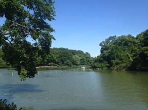 初夏の善福寺上の池