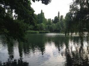 井の頭池2014夏