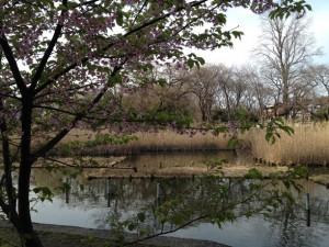 下の池の桃