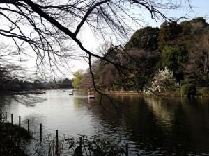 上の池の岸に咲く辛夷