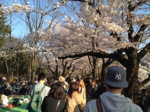 水平に枝を伸ばす桜