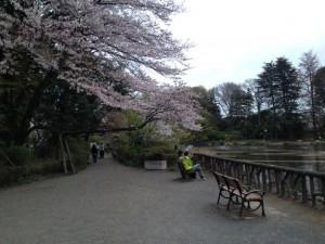 ベンチには桜の庇が