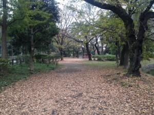落葉の絨毯です