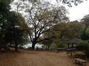 上の池の入り口
