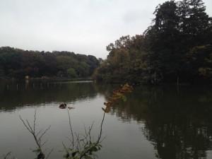 冬の善福寺公園、やっぱりいいですね