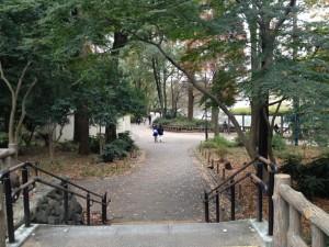 井の頭公園 落ち葉の径