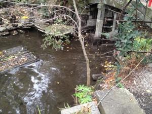 橋の欄干が丸見えです