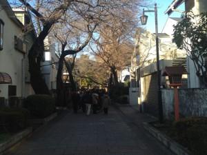 石神井氷川神社 初詣の列
