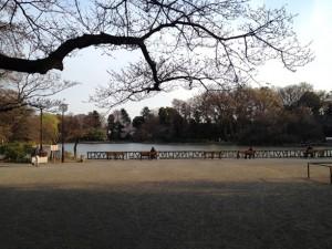善福寺公園と言えばこのベンチ&柵ですねぇ