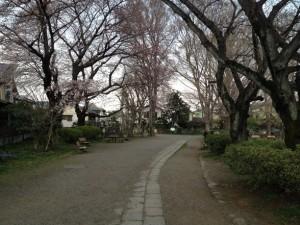 桜木立の予定地