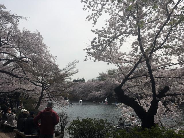 彼岸も此岸も桜です
