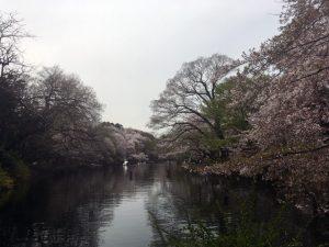 ひょうたん池の前から北西方向を望む