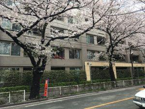 3階4階辺りの住人は、視界が桜で幸せなことになっていそう