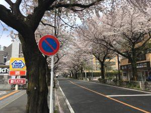 標識に貼付いた桜の花びら