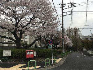 武蔵関公園入口にも桜が