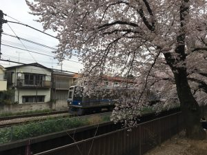 鉄道と桜、という絵も撮れます