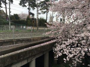 花びらがコンクリートの上に