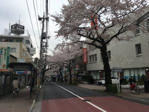 桜並木に足を踏み入れるとこんな感じです