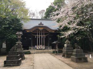 石神井氷川神社の桜