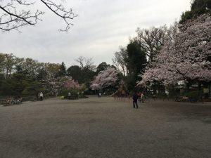散っていない満開の桜ってとても静的な雰囲気があって良いものです
